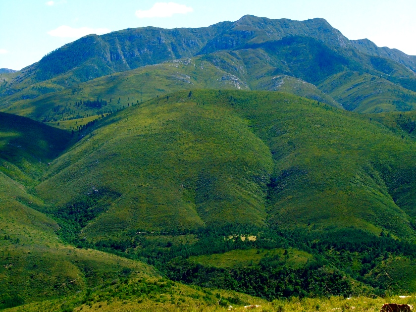 green hills near knysna