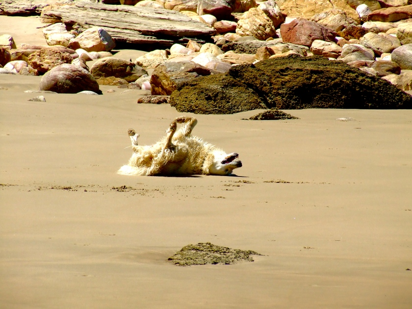 dog on beach knysna