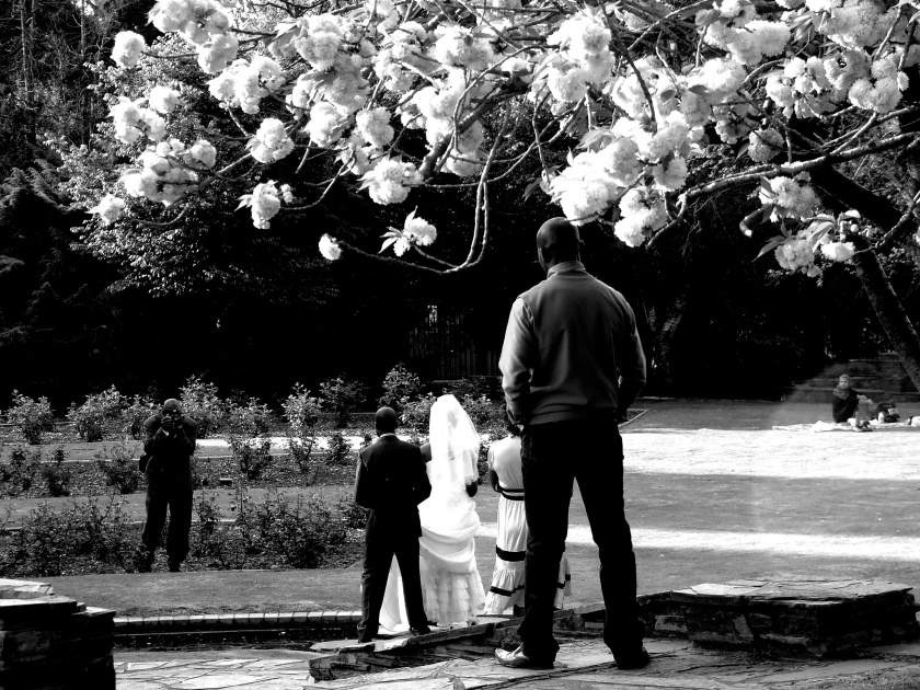 wedding photographer at work in the gardens atg emmerentia dam johannesburg