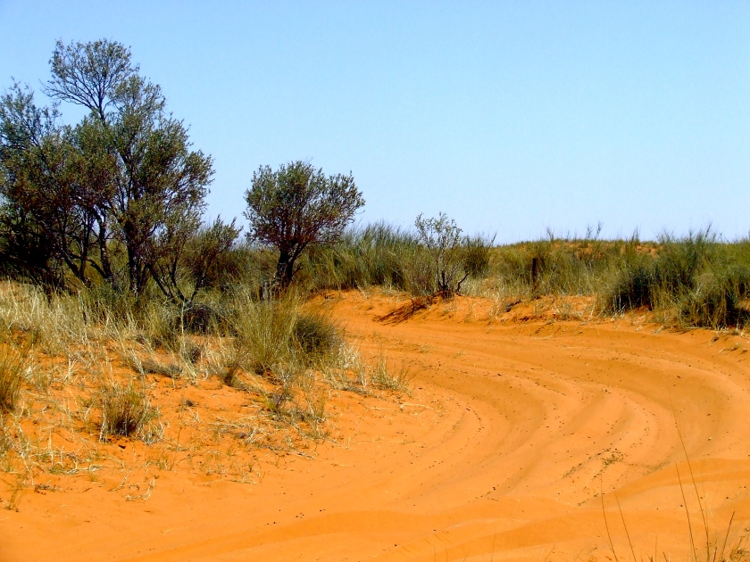 the red sands of the kalahari