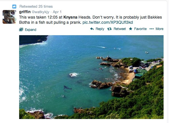 shark in knysna lagoon april fools tweet