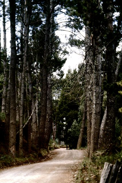 trees in the hogsback eastern cape